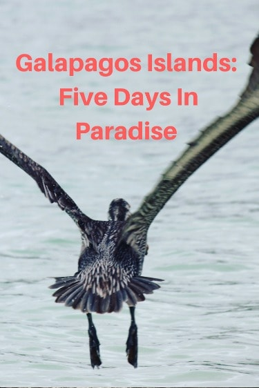 a five day itinerary while cruising the Galapagos Islands