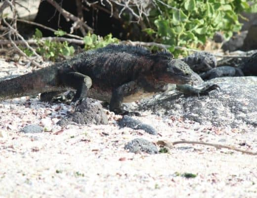 cruising the Galapagos Islands