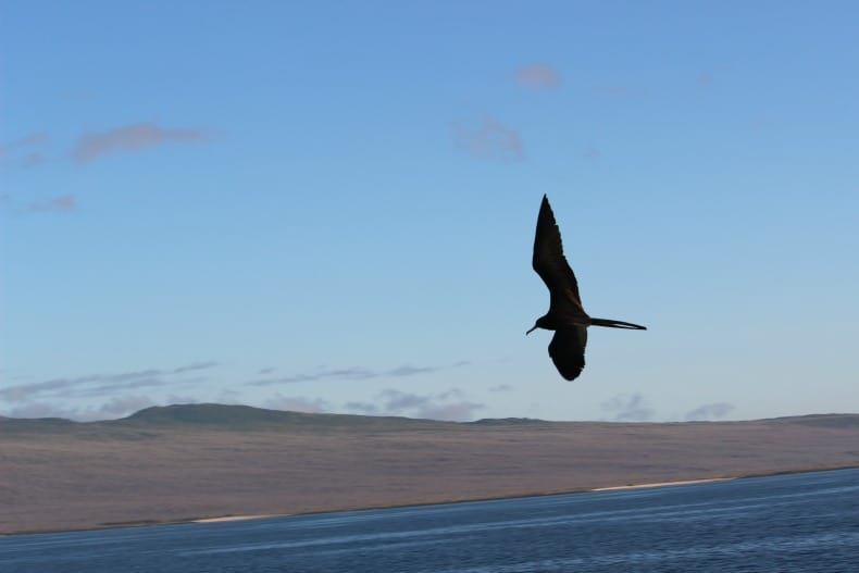 Cruising Galapagos island