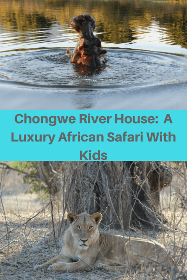 Chongwe River House is a luxurious house on the Chongwe River, near the Zambezi River, in Zambia. There, we had a luxury African safari with our four children. The accommodation, service, and food were exceptional. The wild animal viewing was amazing.