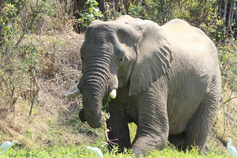 An elephant at the side of the river on our canoe safari.