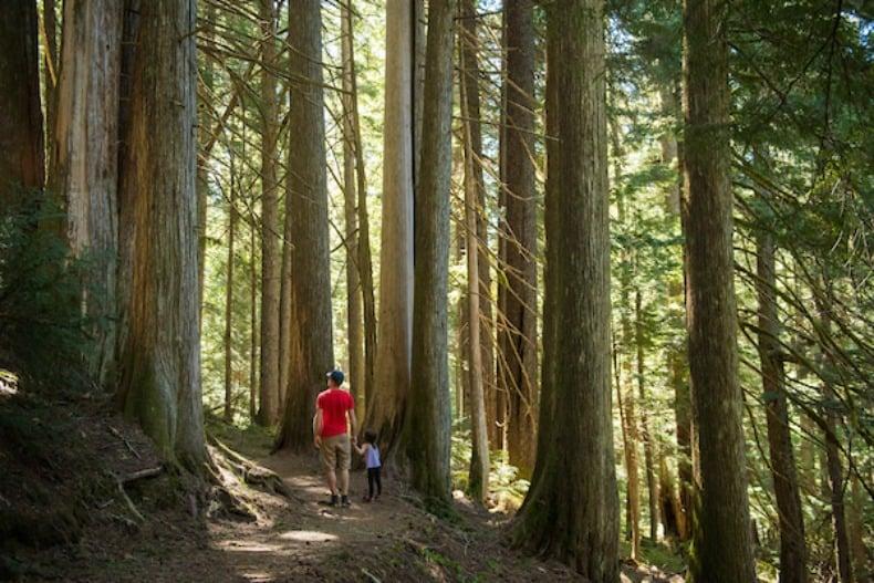 hiking during Whistler summer