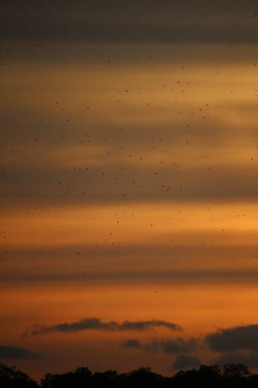 Sunset near the Komodo dragons