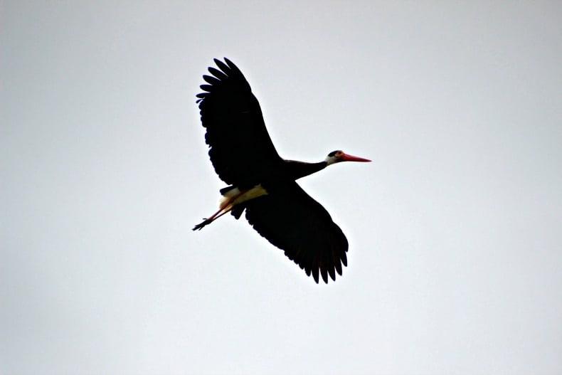 bird on Borneo ecotour