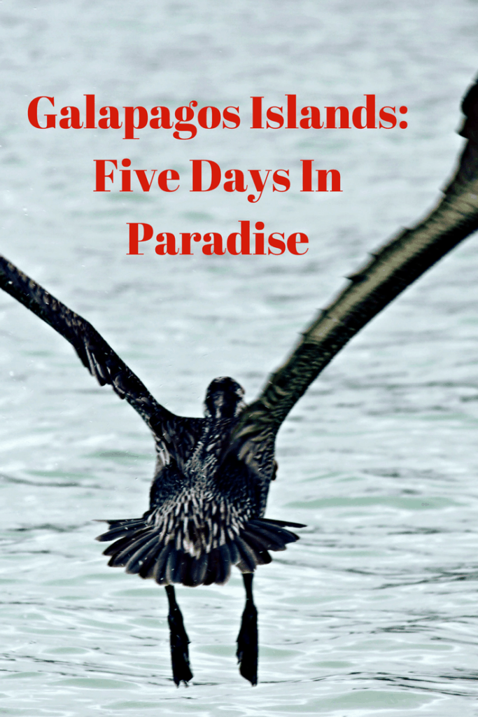 An extraordinary five day itinerary cruising the Galapagos Islands with kids. | albatross, bird, blowhole, blue footed booby, boat cruise, catamaran, Charles Darwin Station, child, Cormorant Point, dingy, Ecuador, first class, five day cruise, Galapagos Island, Galapaguera, iguana, Interpretation Centre, marine iguana, Post Office Bay, San Cristobal Island, Santa Cruz, sea lion, Seaman Journey Catamaran, snorkelling, Suarez Point, teen, tortoises, Witch Hill, family travel, adventure travel