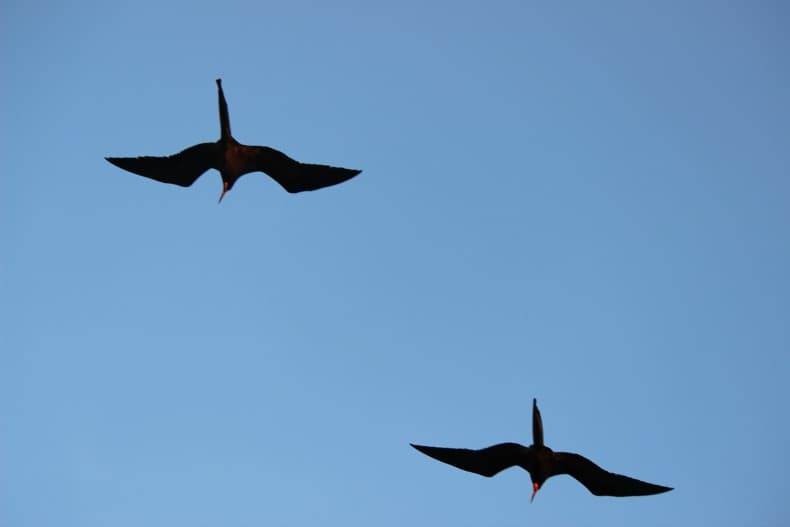 birds fly over us while Cruising the Galapagos Islands