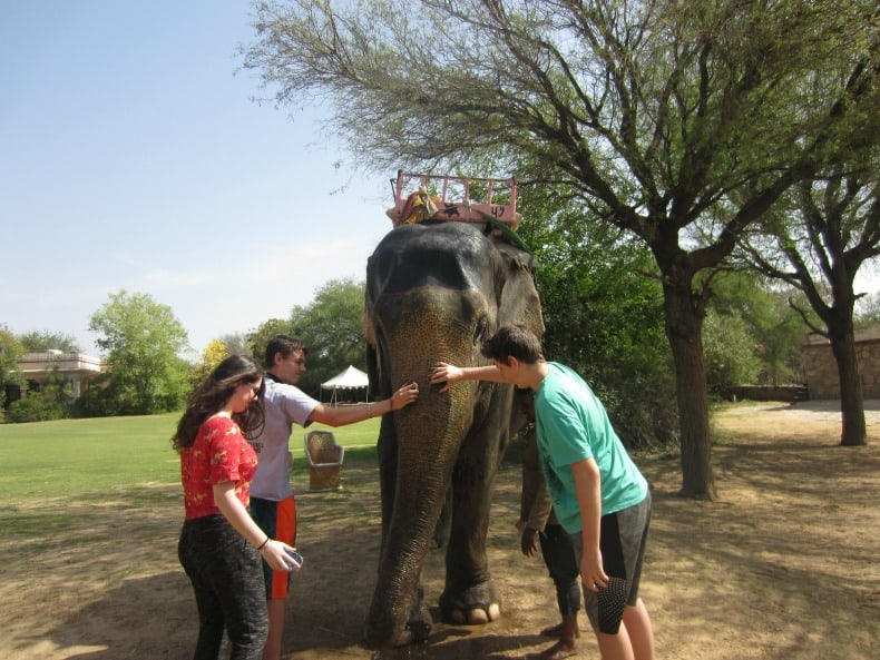 A visit to spend the day with elephants in India.