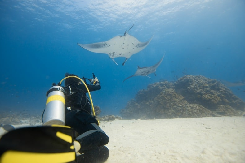 Manta rays near Komodo dragons in Indonesia