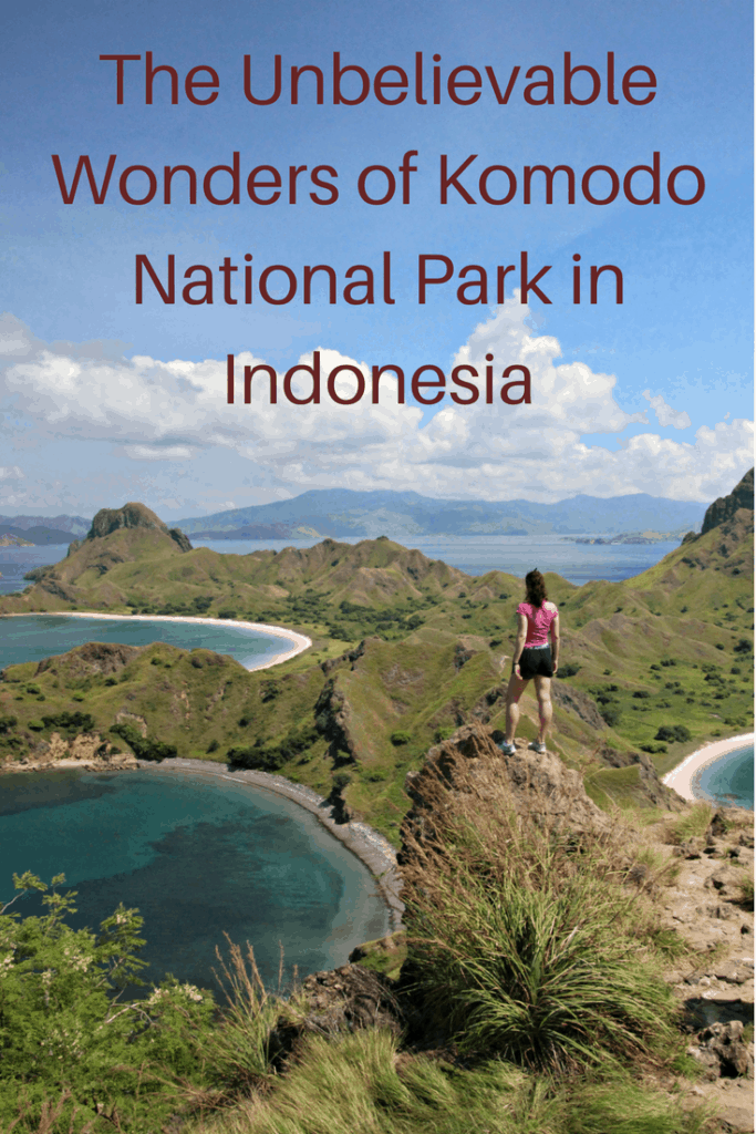 Komodo National Park in Indonesia is a beautiful untouched paradise where you can swim with manta rays and turtles and hike with Komodo dragons. Here is why a trip there should be added to your bucket list. bats, boat, child, Coral Triangle, cruise, Flores, flying foxes, kids, Komodo dragons, Komodo, Komodo National Park, Komodo Resort, manta rays, Padar Island, pink beaches, reef, Rinca Island, scuba diving, Sebayur, snorkelling, swimming, teen, turtles, UNESCO World Heritage Site
