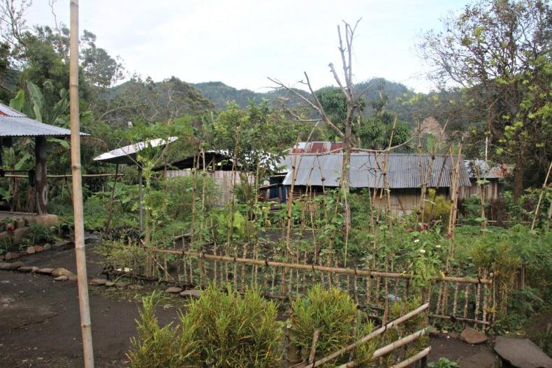 farming near Indonesia volcano
