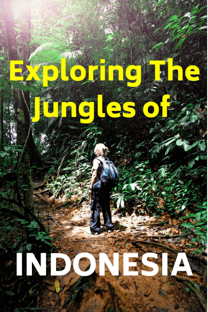 We went deep into the jungles of Indonesia on a four day Borneo ecotour. We explored rivers, hiked into the rainforest and discovered unbelievable wildlife, including the endangered orangutan. It was extraordinary. #Indonesia #Borneo #travel #familytravel| Asia, Java Sea, Kalimantan, klotok, monkey, Pangkalan Bun, proboscis, Rimba Orangutan Ecolodge, Tanjung Puting