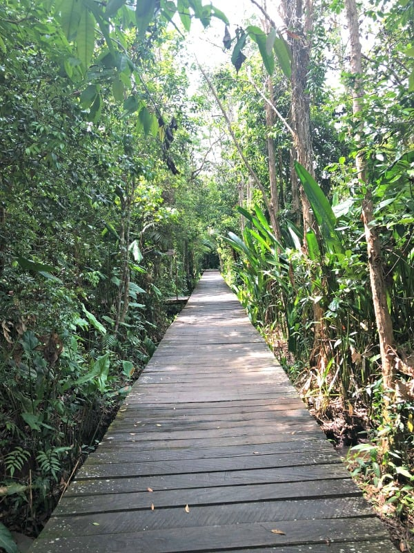 Walkway at hotel on borneo ecotour