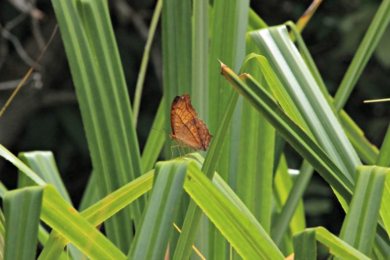 butterfly on Borneo ecotour