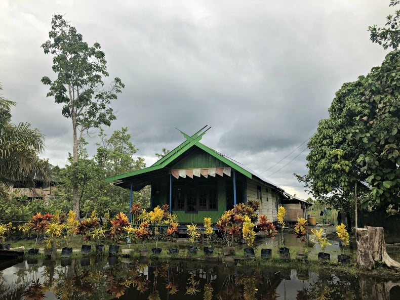 lignting bugs in Borneo Indonesia