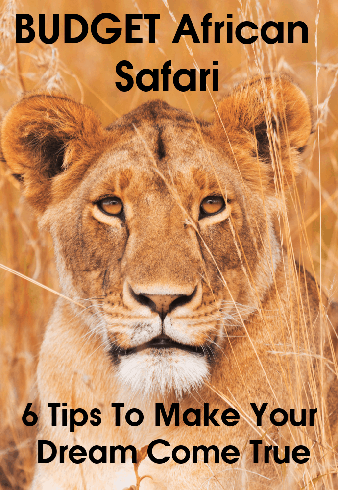 You do not need a large budget to go on safari in Africa. The key is to understand how to save money. I have been on 8 safaris in 5 countries over 34 years. Here are my 6 tips for creating your budget African safari. #travel #familytravel #Africa #safari #budget | Kenya, Kruger, Loisaba, malaria, Masai Mara, National Park, private game reserve, safari, South Africa, vaccination, visa, zambia