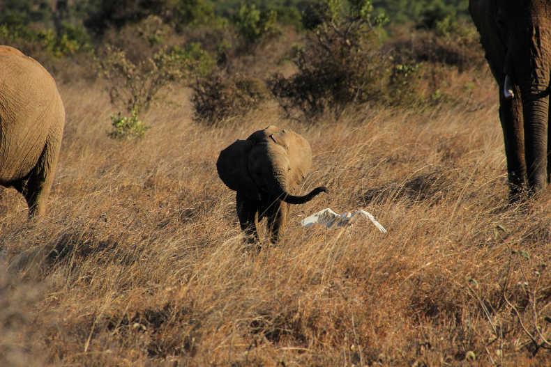 affordable African safari
