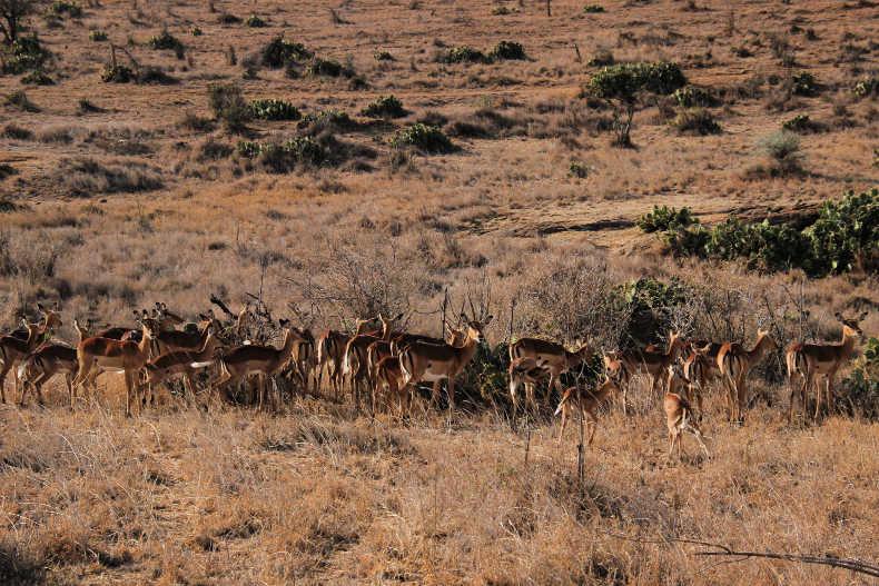 budget African safari